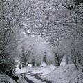 Winters Lane by Jackie Tweddle