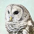 Winters Owl, Barred Hoot Owl Winter Snow Falling by Melissa Bittinger