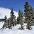 Winter's Peace by Leda Robertson