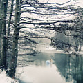 Winter's Reach II by Jessica Jenney