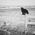 Winter's Stalker by Rikk Flohr