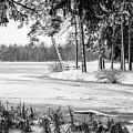 Winter's Tropical Landscape by Joann Long