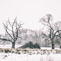 Wintery Morning by Martin Newman