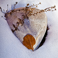 Wintery Still Life by Christopher Holmes