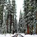 Wintry Forest Drive by Koushik C