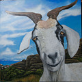 Wip 2- Goats Of St. Martin by Cindy D Chinn
