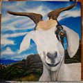 Wip- Goats Of St. Martin by Cindy D Chinn