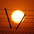 Wire And Sun by Cliff Norton