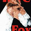 Wire Fox Terrier by Kathleen Sepulveda