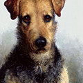 Wire Fox Terrier by Lilian Cheviot