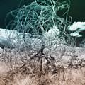 Wire Tree by Blake Webster