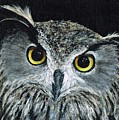 Wise Eyes II by Michelle Muck