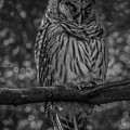 Wise Old Owl by Jacqui Boonstra