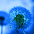 Wish Away The Blues by Valerie Fuqua