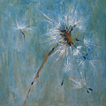 Wishes by Barbara Andolsek