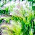 Wispy Green by Richard Gehlbach