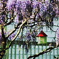 Wisteria And Birdhouse by Susan Savad