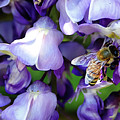 Wisteria Bee by Rick Lawler