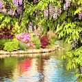 Wisteria By The Lake - Beacon Hill Park Victoria by Peggy Collins