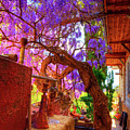 Wisteria Canopy In Bisbee Arizona by Charlene Mitchell