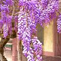 Wisteria Cascade by Susan Rissi Tregoning