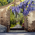 Wisteria Gate by Michele Snell