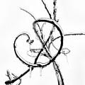 Wisteria Ice by Steve Rudolph