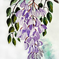 Wisteria by Karin  Dawn Kelshall- Best