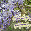 Wisteria Sympathy Card by Mother Nature