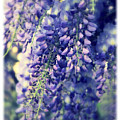 Wisteria Whimsy by Jessica Jenney