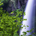 Witch Hazel And Falls by Robert Potts