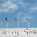 Witchey Sisters by Rosalie Scanlon