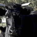 With Love - Bull Friend by Theresa  Asher