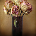 Withered Beauty by Jessica Jenney