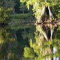 Withlacoochee Cypress Reflections by Warren Thompson