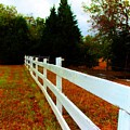 Wodden Fence  by Christine Townsend