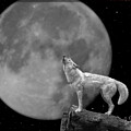 Wolf And Moon by Brian Adamson