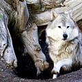 Wolf Den 1 by Marty Koch