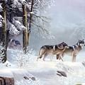 Wolf by Dorothy Binder