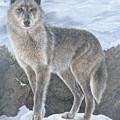 Wolf by Edmund Price