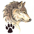 Wolf Head Profile by Melissa A Benson