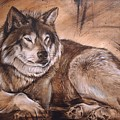 Wolf by JAndy
