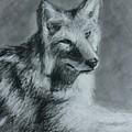 Wolf by JP Morris