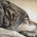 Wolf Nap by Pat Erickson