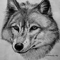 Wolf Sketch by Nick Gustafson