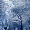 Wolf by Svetlana Sewell