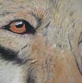 Wolf's Gaze by Peter Graore