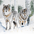 Wolves In The Birch Trees  by Joette Snyder
