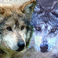 Wolves by Tom Romeo