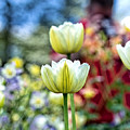 Photographer Behind The Flowers by Tom Gari Gallery-Three-Photography
